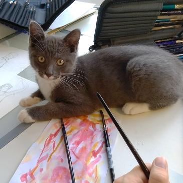 Hoe verzorg ik een kat – voor kunstenaars