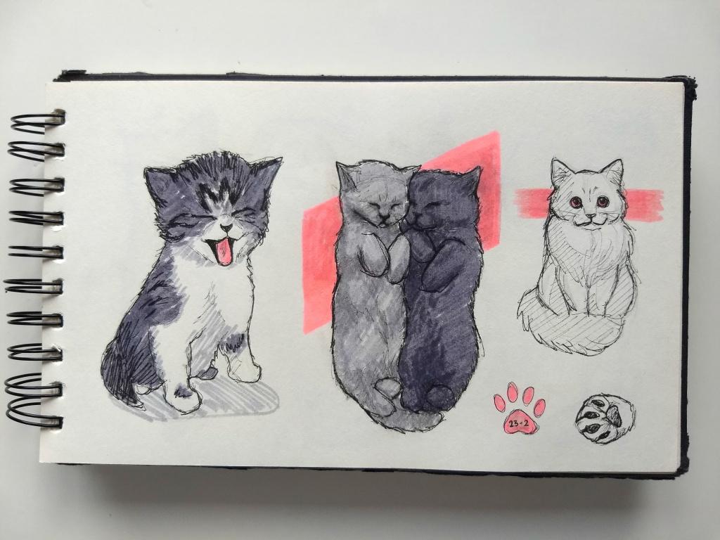 kittens schetsen in mijn schetsboek - Dagdromen op Doek